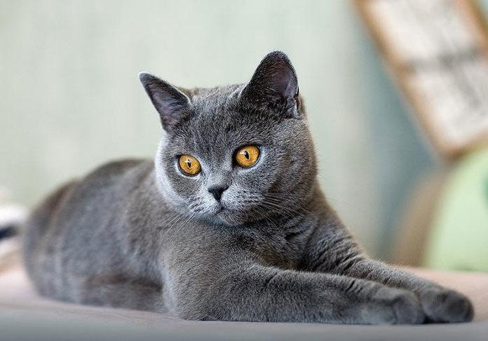 kuwetę dla kota