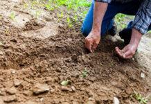 Poradnik ogrodnika: najpopularniejsze warzywa w polskich ogródkach