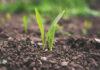 Fugicydowe środki ochrony roślin